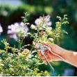 GARDENA Kovadlinkové zahradní nůžky Comfort (8787-20)
