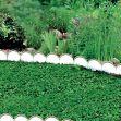 Plastový zahradní obrubník 10m GARDEN LINE