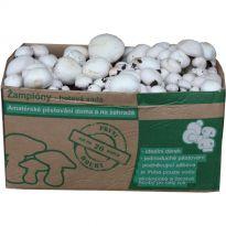 Sada pro pěstování Žampión bílý 10kg (Agaricus Bisporus)