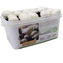 Sada pro pěstování Žampión bílý 5L (Agaricus Bisporus)